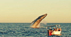 Whales in Cabo